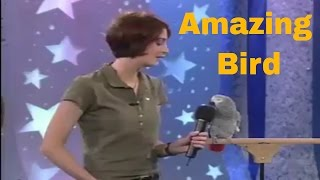 Funny Bird talking very Amazing. every questions answered for birds talking