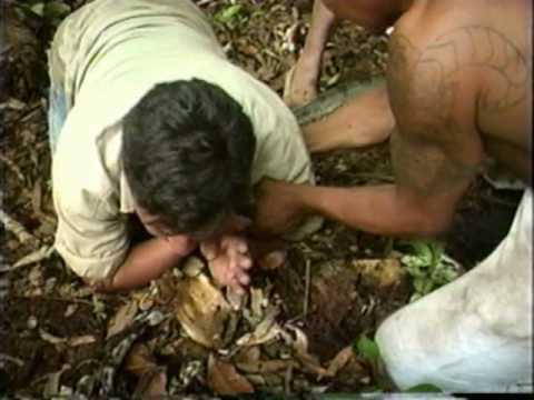 Anaconda ataca repórter