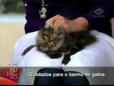 COMO DAR BANHO EM GATOS MIAURISA NOS ENSINA TV GAZETA 11 2098 0854