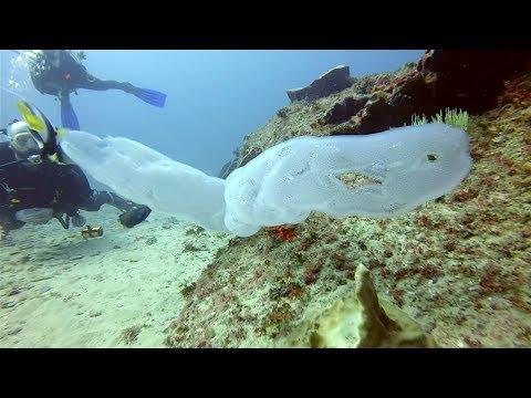 Xxx Mp4 समुद्र के 5 चौकानेवाले खतरनाक जानवर 5 DEADLIEST Creatures Of The Amazon 3gp Sex