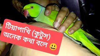 Our ringneck parrot 'kutus'.He speaks bengali just like us. U gonna love him . Plz guyz have a look.
