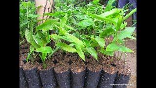 Sistema de Producción de Plantulas - TvAgro por Juan Gonzalo Angel