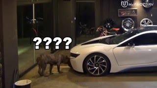 [맥팩토리TV] 강아지의 BMW 어텍!!  BMW  i8 VS  Cane Corso