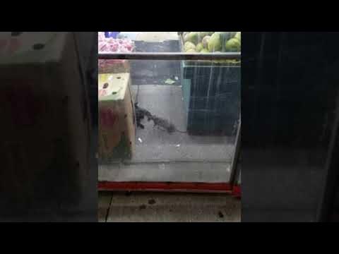 Xxx Mp4 New York Rat Bullies Cat Out Of The Way ViralHog 3gp Sex