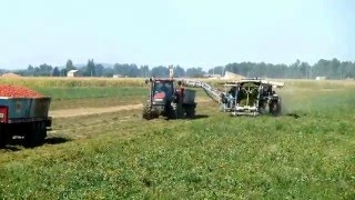 TRANSA Sustainable Processing Tomatoes Harvesting. 2012 Crop.