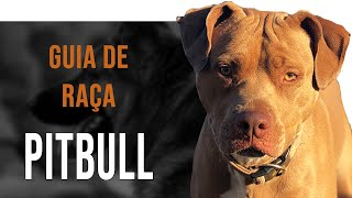 O comportamento do American Pitbull Terrier
