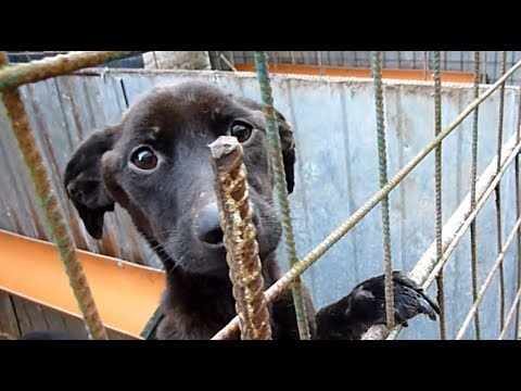 Xxx Mp4 I Looked Into This Dog's Sad Eyes And Promised Her This 3gp Sex