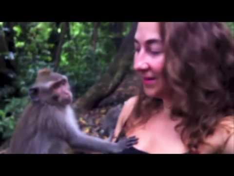 monkey grabs girl boobs
