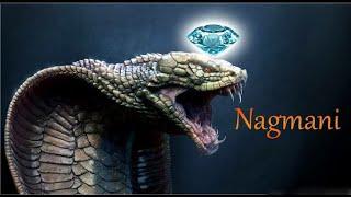 Nagamani Reality or Myth? Naag mani - Cobra Pearl Exists! cobra stone   manickam stone   snake stone