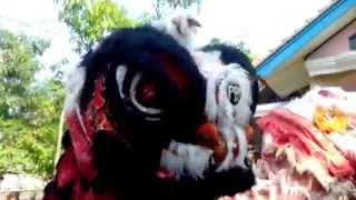 A Funny video in Indramayu indonesia Kuda Depok Indramayu