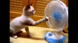 مقاطع مضحكة للقطط