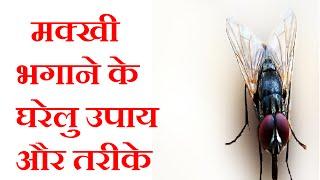 मक्खी भगाने के घरेलु उपाय और तरीके|  Narural Remedies To Get Rid Of Housefly|  Hindi Tips|  Jyotir
