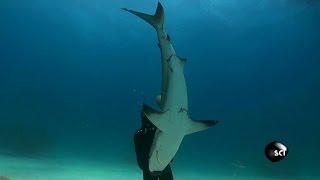 Jawsome Shark Balancing