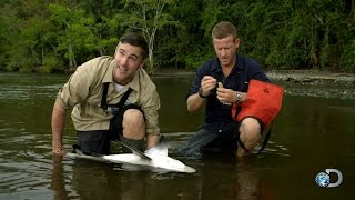 Can Bull Sharks Sense Crocodiles?