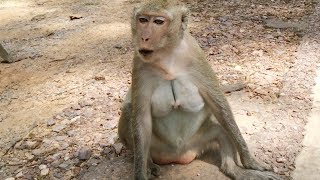 Before baby gone away and after baby gone away - Mother monkey cry call her baby monkey