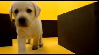 Pedigree Dog Food 2010 Ad
