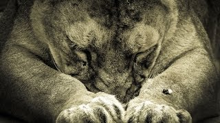 ► Swimming Lions  (Full Documentary, Sky Vision)