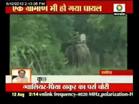 Tiger terror in Umaria district in Madhya Pradesh