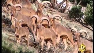 الحياة البرية في صحاري شمال أفريقيا - الجزء الرابع