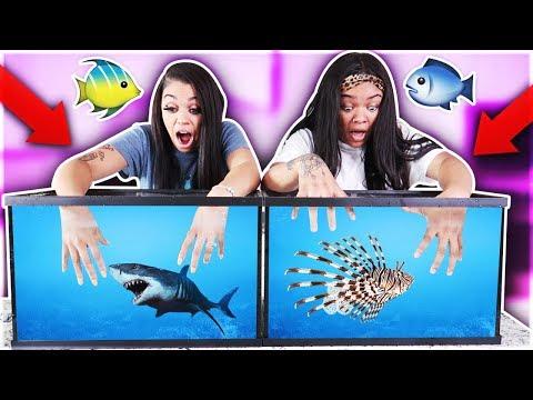 WHAT'S IN THE BOX CHALLENGE - UNDERWATER EDITION OCEAN ANIMALS!!