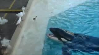 نهنگ وحشی