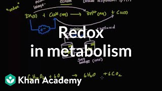 Oxidation and reduction in metabolism | Biomolecules | MCAT | Khan Academy