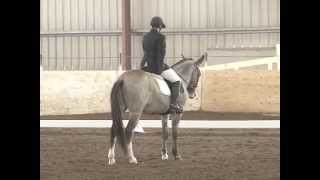 Incognito - 8 year-old Mule doing Dressage