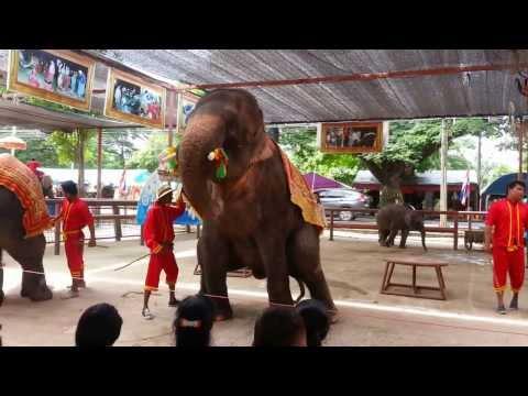 ช้างโชว์
