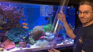 ClownTube Slide - Adding clownfish to an anemone with a big clear pipe