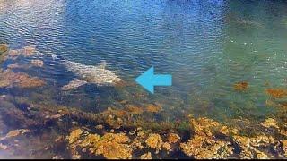 SHARKS in Pond! Epic Fishing Shark Battle!