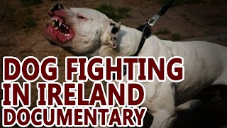 Dog Fighting in Ireland (Pit Bull Documentary)