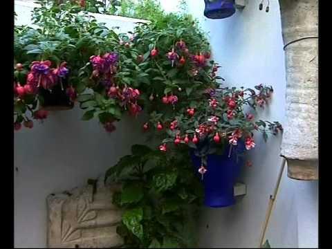 El Jardinero en Casa Nos vamos de patios