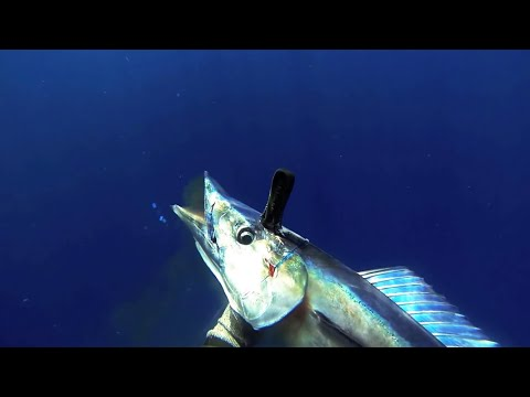 Ukumulua Spearfishing Maui Blue Gold
