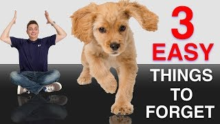 3 Quick Easy Things to Forget When Training Your Puppy or Dog!