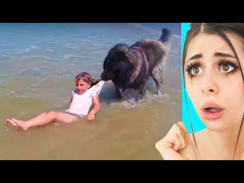 Unbelievable Animals That Changed Peoples Lives