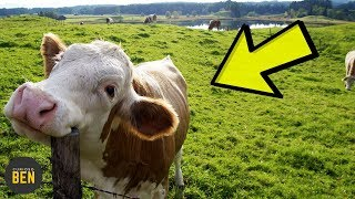 7 Animales Que Tienen Comportamientos Extraños