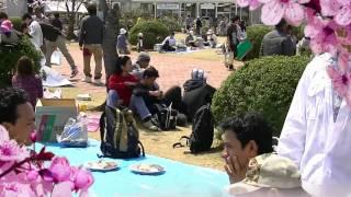 Hanami 2011