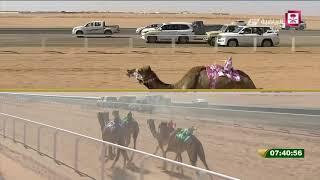 """سباق الهجن المسائي """" جائزة الملك عبدالعزيز """" 1439/5/11هـ"""