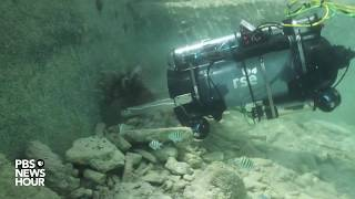 Lionfish robot zapper hits the open water