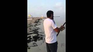 صيد قرم بياض في شاطي النهود البرك @  بدر ابوالفضل
