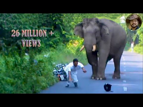 Xxx Mp4 Elephant Chasing Due To Foolish Activity 3gp Sex