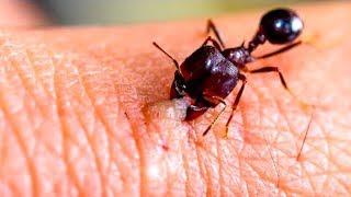 9 Schädliche Insekten, die du vermeiden solltest!