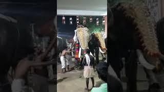 Kollam pisharikkvu elephant attack 2018