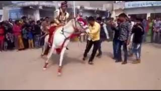 Indian Marriage Horse Funny Video