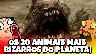OS 20 ANIMAIS MAIS BIZARROS DO PLANETA