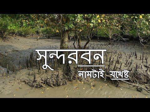 Xxx Mp4 সুন্দরবন সম্পর্কে অজানা কথা Amazing Facts About Sundarbans In Bengali 3gp Sex