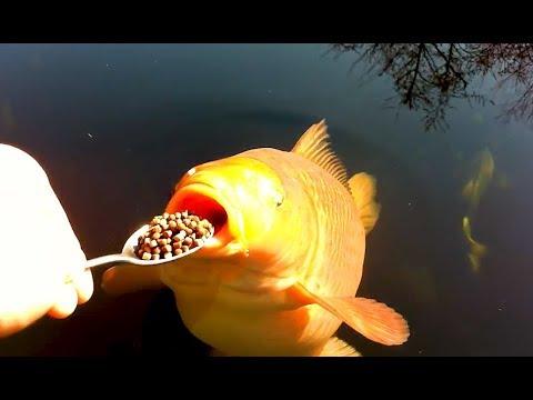 Xxx Mp4 Coole Videos 365 Ftterung Der Fische Feeding The Fish Stern DuTube 3gp Sex