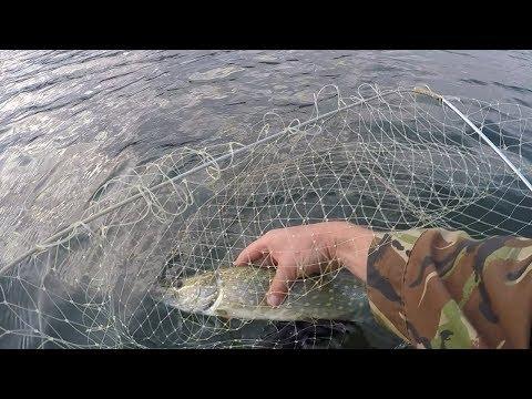 рыбалка хищника в крыму видео
