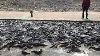 AMAZING FISH RAIN in China and India MUST WATCH