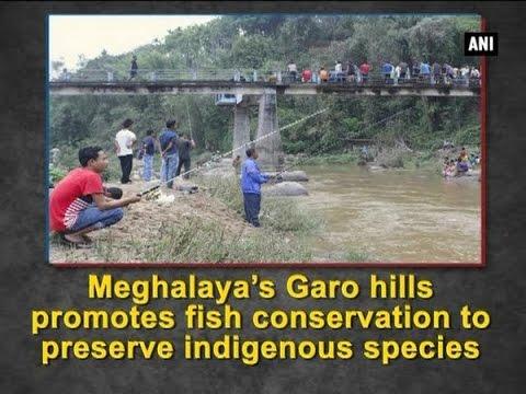 Xxx Mp4 Meghalaya's Garo Hills Promotes Fish Conservation To Preserve Indigenous Species ANI News 3gp Sex